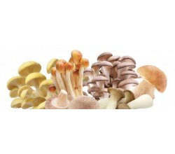 frische pilze kaufen